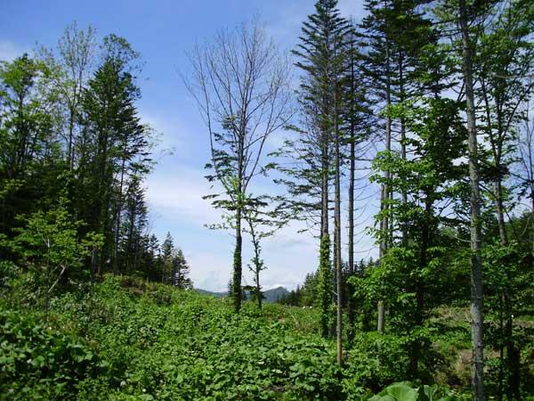 森林林業活性化議員連盟