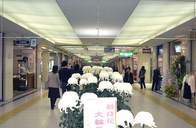 和歌山知事選挙