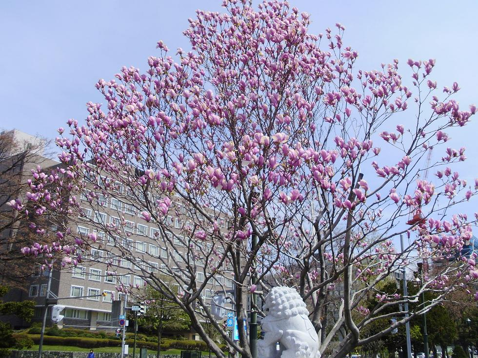 日本軍「慰安婦問題の解決をめざす北海道の会設立記念集会」